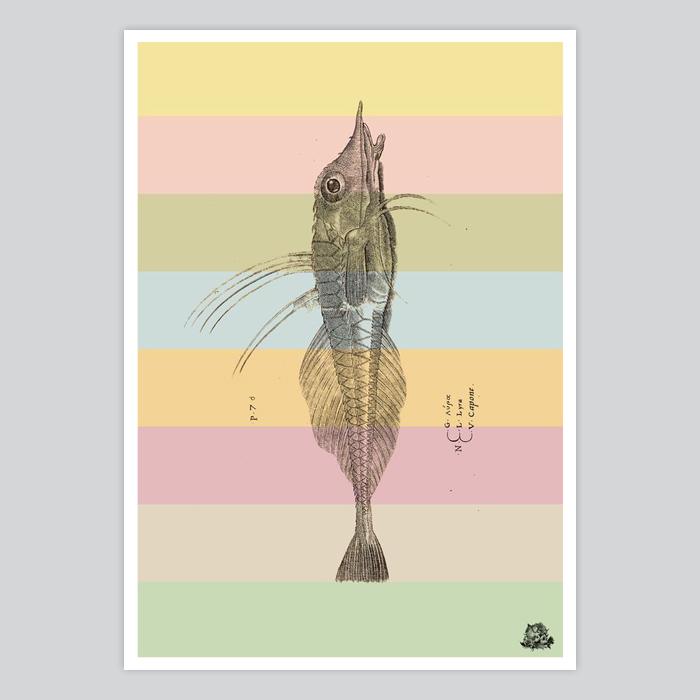 Piper gurnard wings fish art poster by artollo for Wings fish