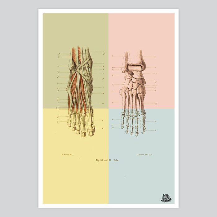 Vintage Anatomy Print Human Foot Bones Muscle Illustration By Artollo