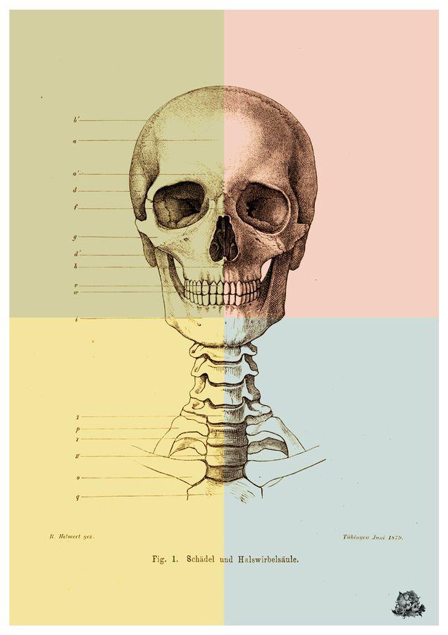 Antique human skull anatomy art poster - By Artollo
