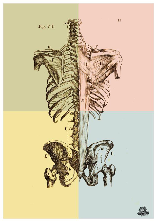 Human Spine Bones Wall Art By Artollo