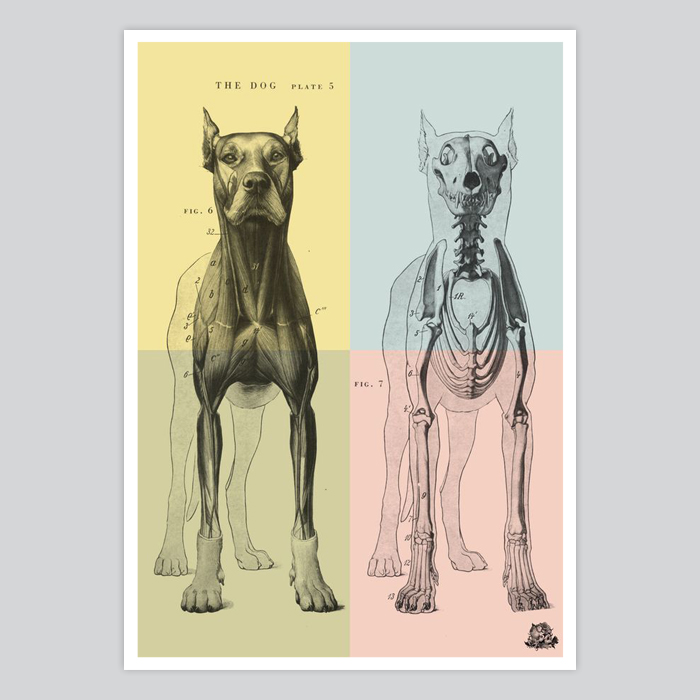 Dog illustration anatomy wall art skeleton poster - By Artollo