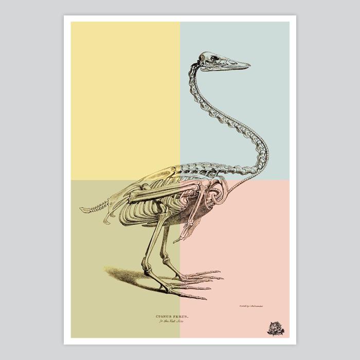 Swan skeleton print wall decor - By Artollo
